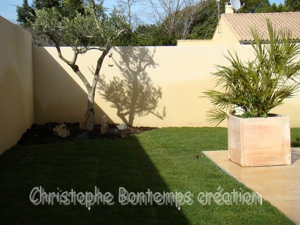 Plantation olivier et gazon en plaque