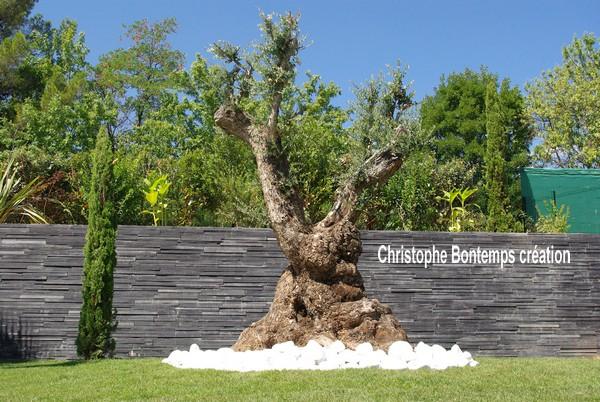Création et plantation Olivier, gazon en plaques et parements