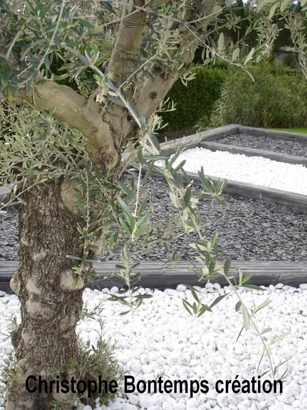 Plantation Olivier galets marbre de Carrare et paillette d`ardoise