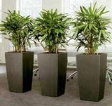 Pot galavanisé et palmiers